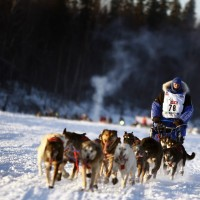 Finding Success at the End of a Dogsled